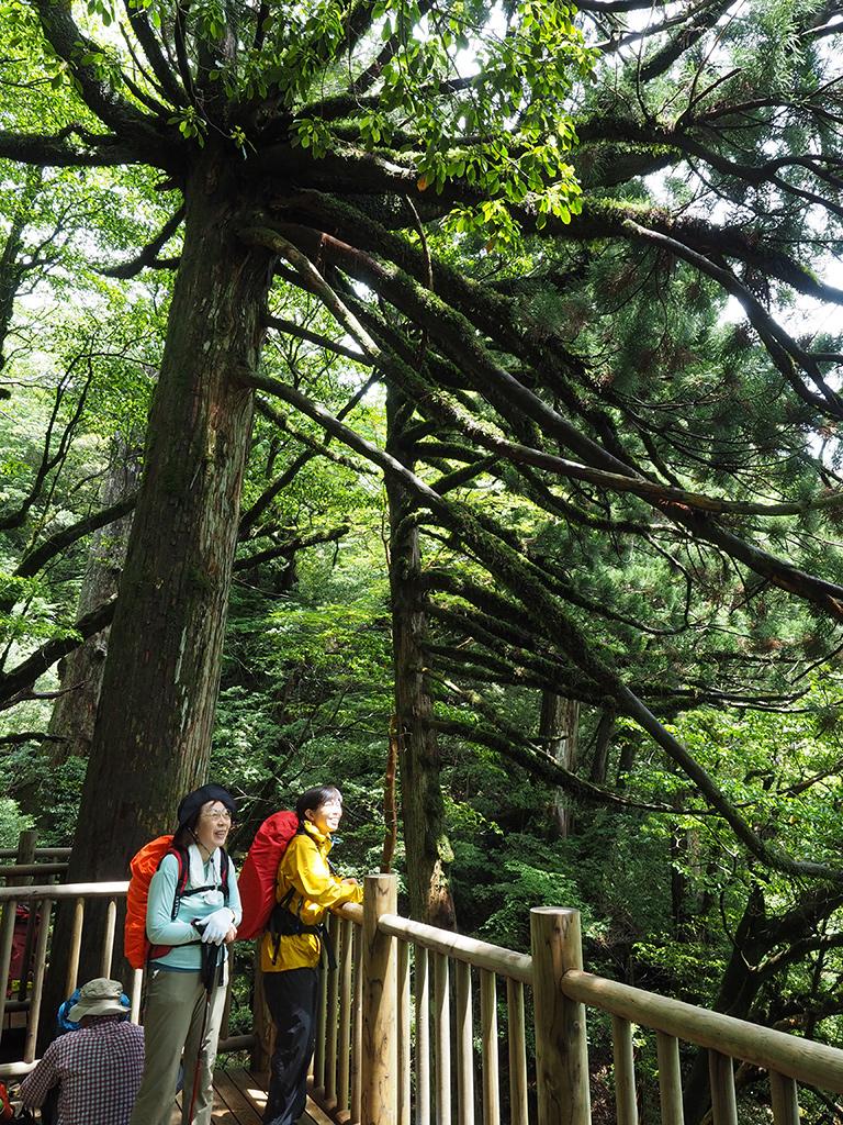 縄文杉の展望デッキから見える変わったスギを見て喜ぶ二人の写真