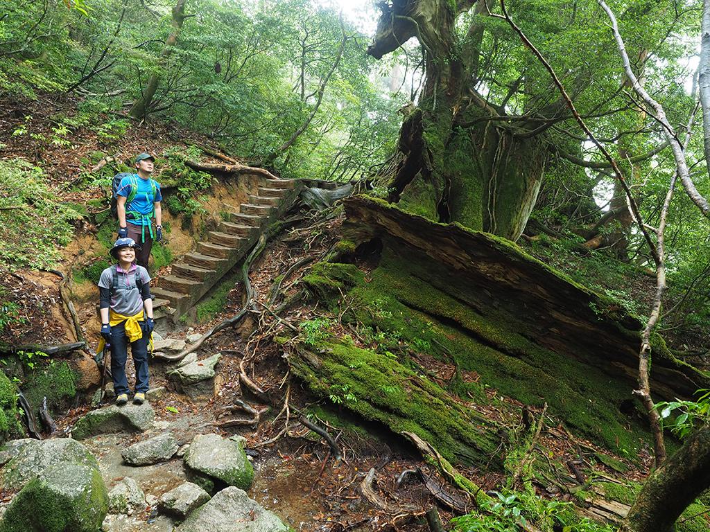 雨に濡れた巨木の倒木と苔を横にしながら撮った写真