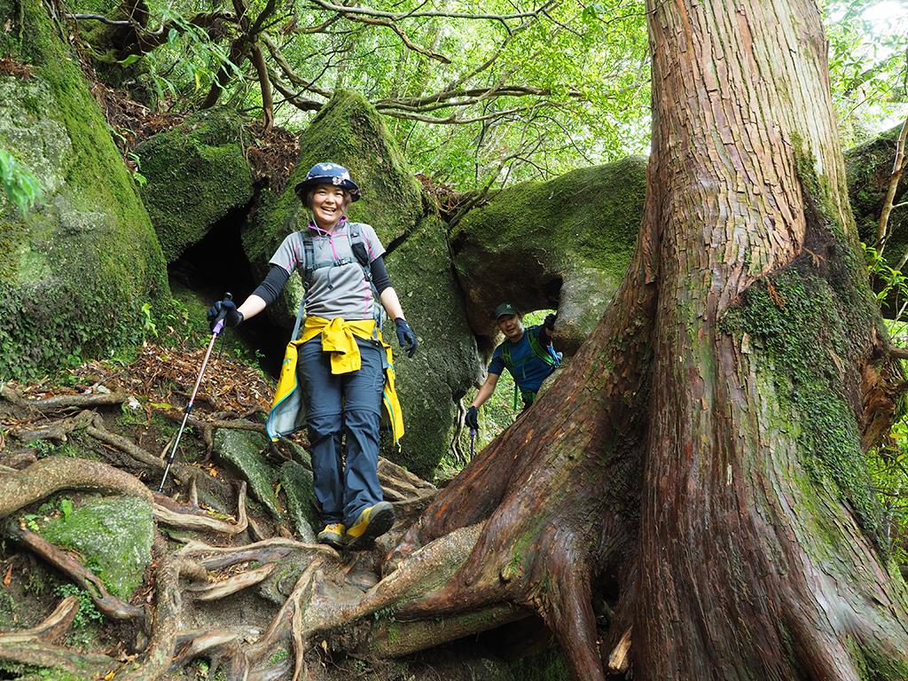 ヤマグルマという木がトンネルを作っていて、そこを楽しそうに通り抜けてくる二人の写真