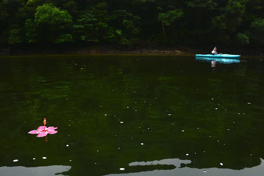 川面に漂うハイビスカスと遠くに居る参加者の写真