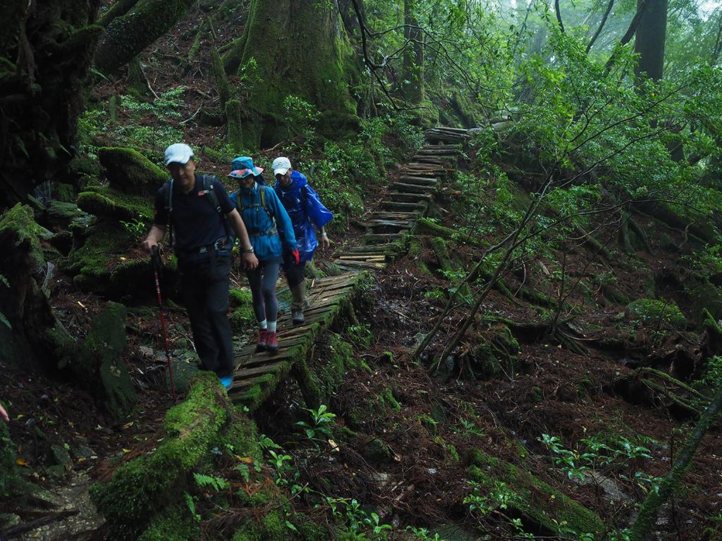 雨が強くなり、暗くなった森の中を歩く3人の写真