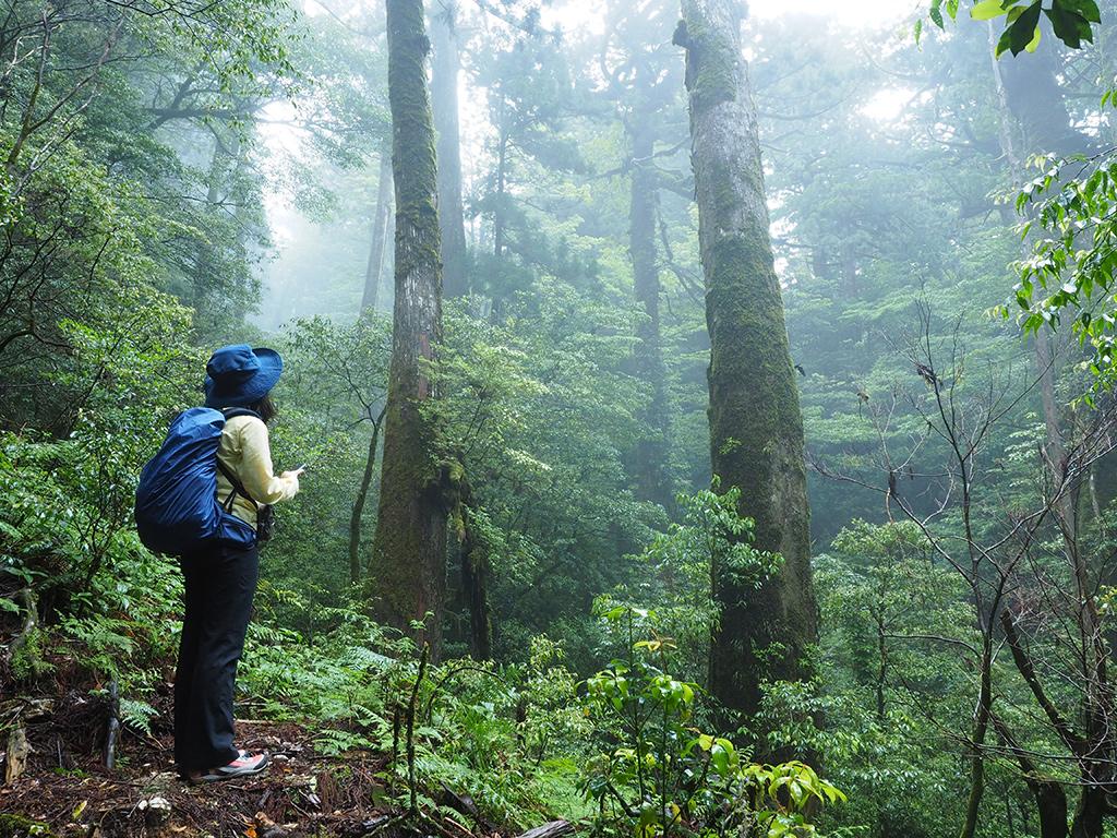 樹齢300年を超える杉が立ち並ぶ風景を見ている参加者の後ろ姿写真