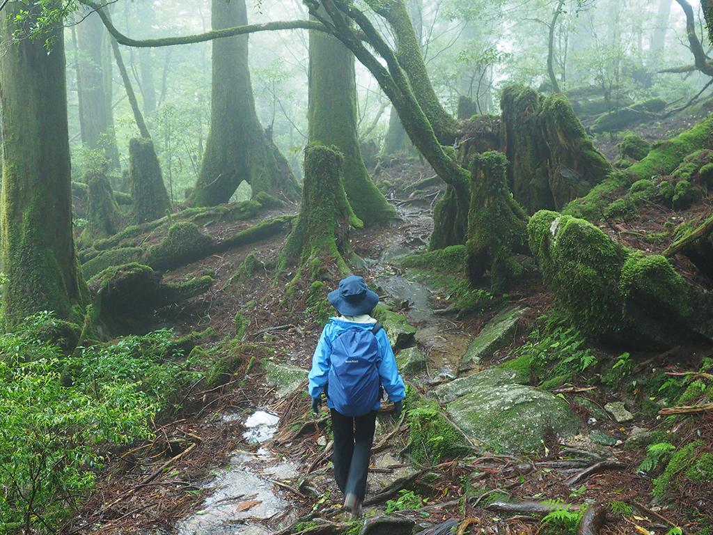 濃い雲に覆われた苔むす森の中を奥へ歩いて行く参加者の写真