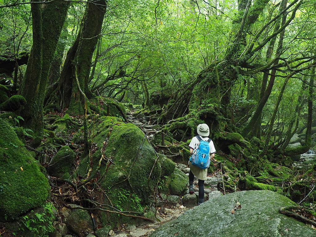 苔むした森を奥へ奥へと歩いて行く参加者の後ろ姿写真