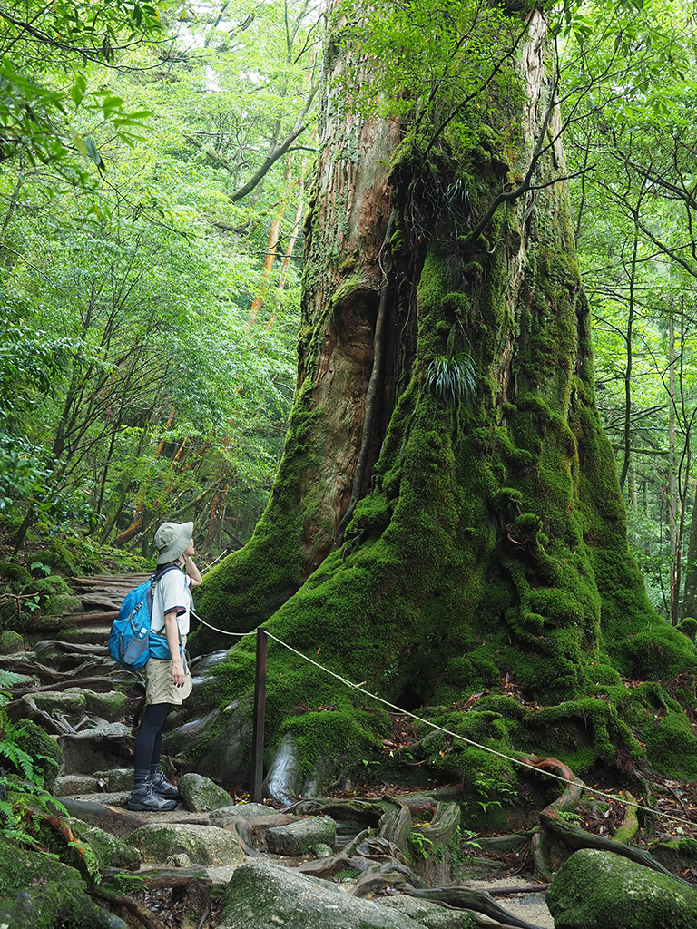 七本杉を見上げている参加者の写真