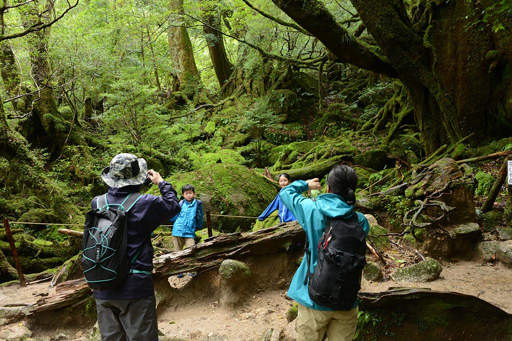 念願の旧・もののけの森(苔むす森)に到着し、お子さんの写真を撮るご両親と壮大な風景写真