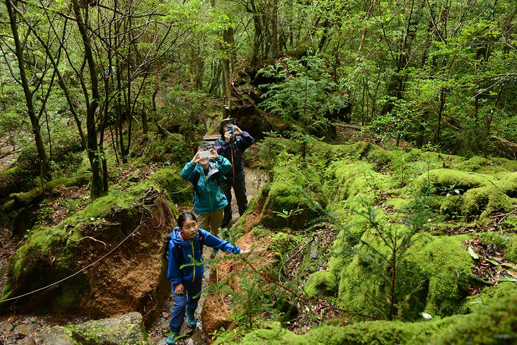 浸食された登山道さえも緑に覆う苔むした登山道に感心し、写真を撮るご家族