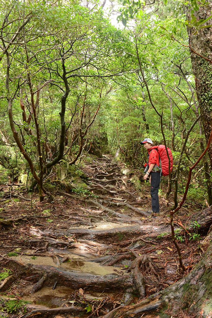 強烈な雨予報だったのに、登山道にキラキラと差し込む光と笑顔のMさん写真