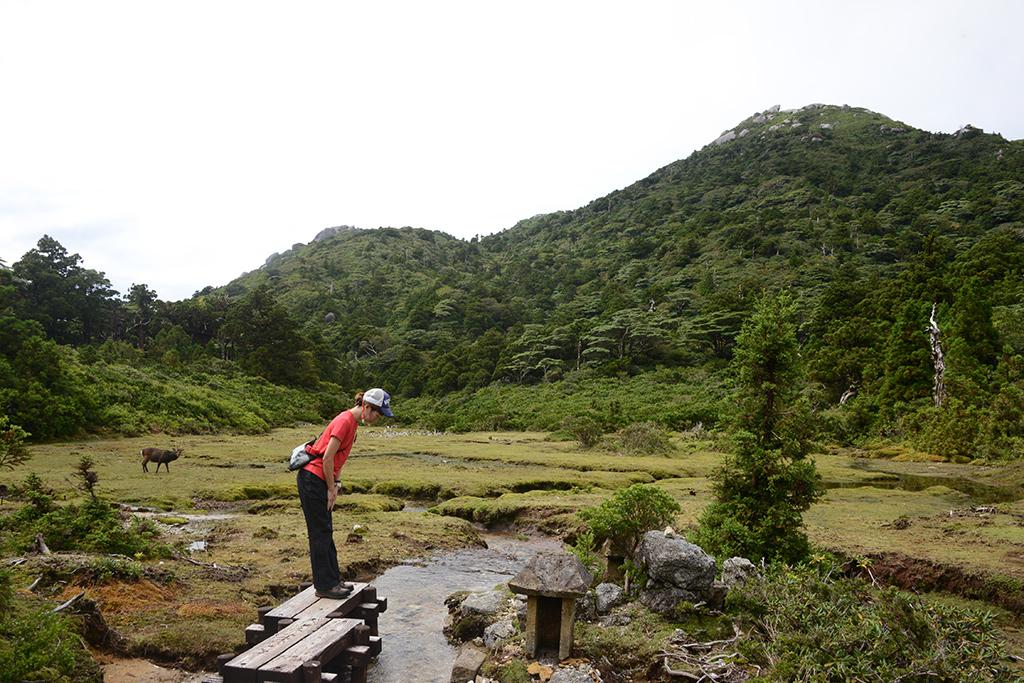 花之江河にある祠にお辞儀をするMさんとそれを眺める立派な雄シカ