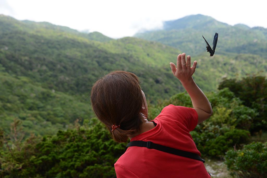 山頂で休憩するMさんの周りだけを何故か飛び続けるミヤマカラスアゲハとそっと追い払おうとするMさんの写真