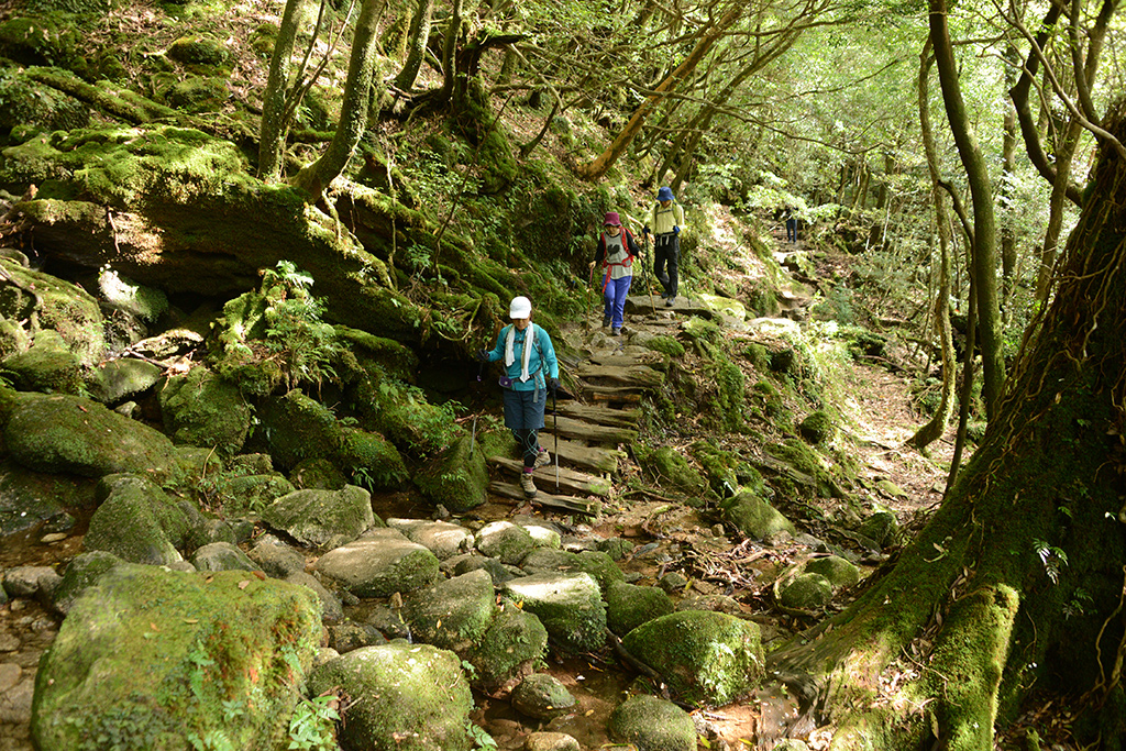 苔むした森の中を、足元に注意を払いながら下山してくる3人の写真