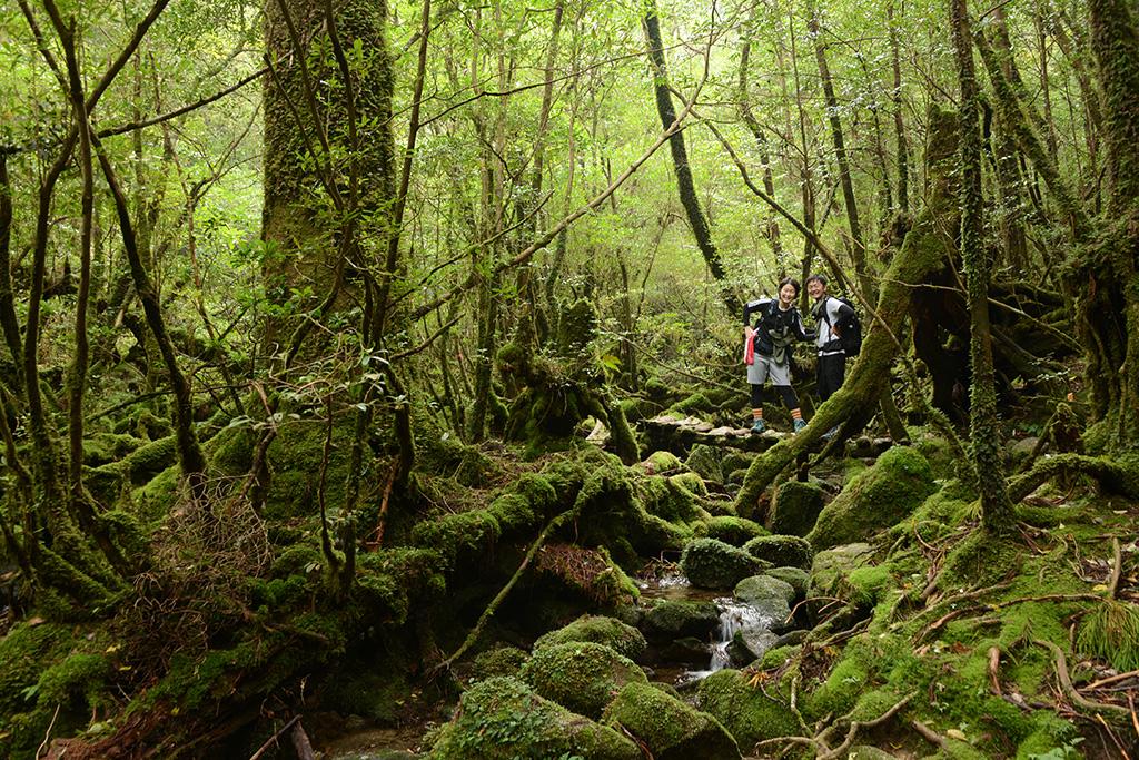 苔むした森の中に同化するように在る橋を渡る2人の写真