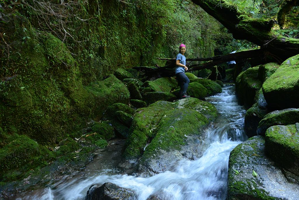 清流の横に迫る苔に一面覆われた岩壁を背にしてこちらに振り向く参加者の写真