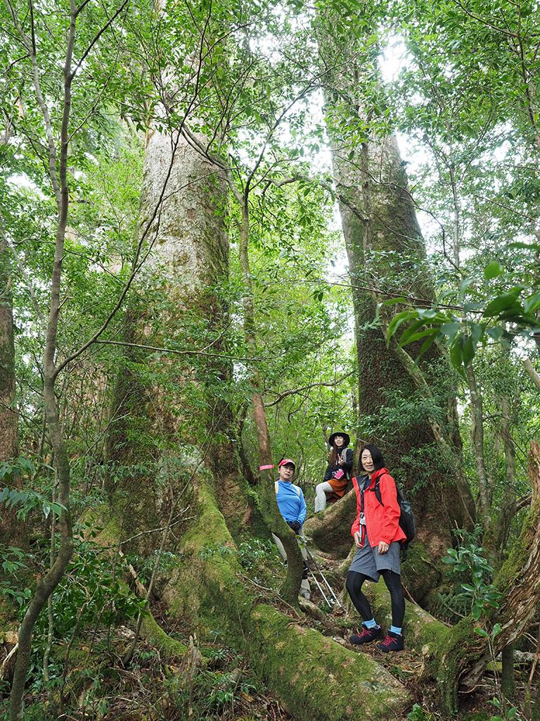大きなモミの木が二本並んで立っている間に並ぶ参加者3人の写真