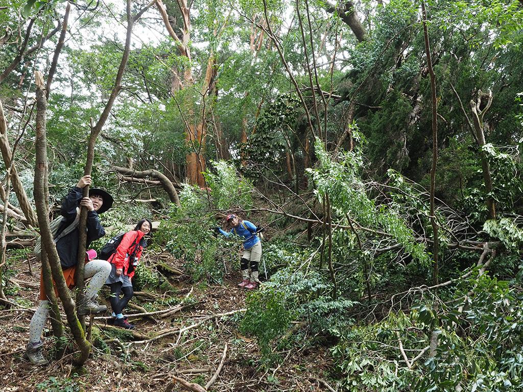 台風で木が倒れまくっているエリアをバックに撮った3人の写真