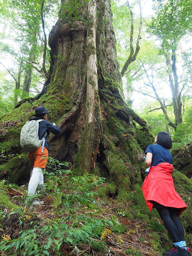 三穂野杉を見上げて写真を撮る二人の写真