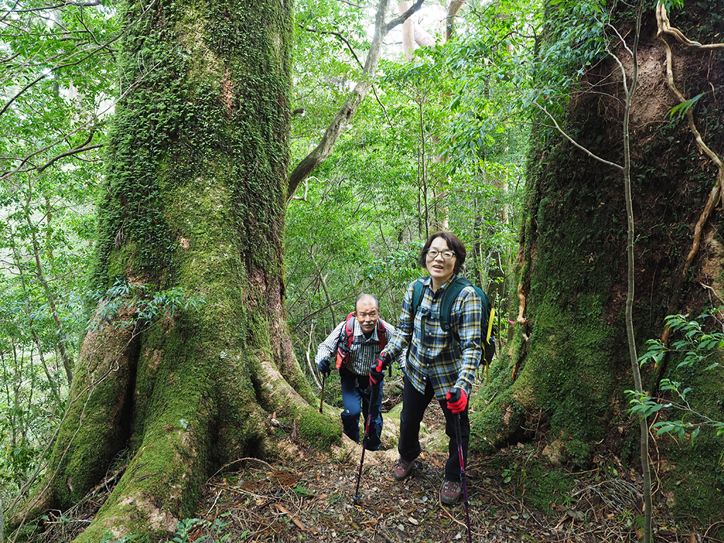 巨大なモミの木の間を通り抜ける参加者のご夫妻の写真
