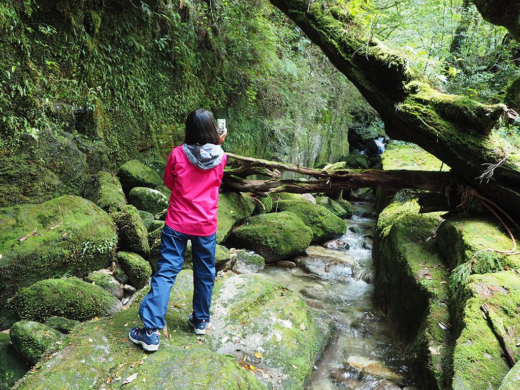 苔の回廊風景を撮る参加者の後ろ姿写真