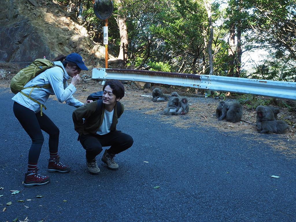 道路沿いで毛繕いをするヤクザルの集団の前で、のみ取りの真似をするご夫婦の写真