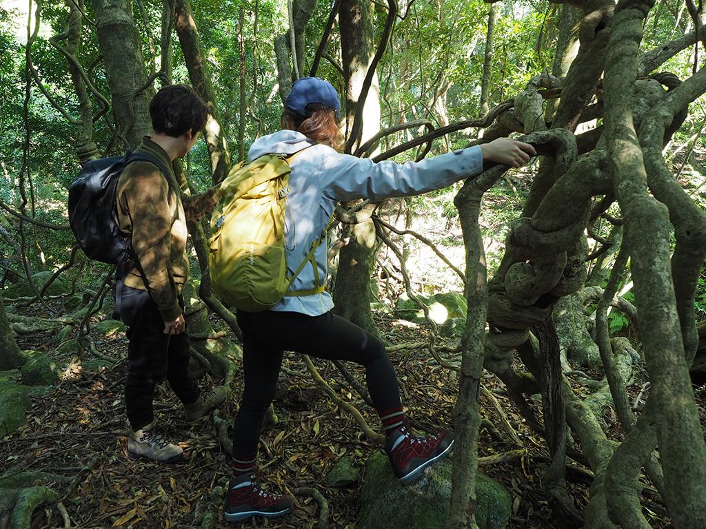 照葉樹林の中で繁茂する太いツルを眺めるお二人の写真