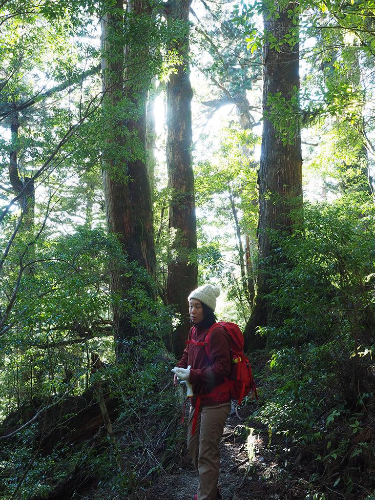 スギの天然林を気持ち良さそうに見渡していたIさんの写真