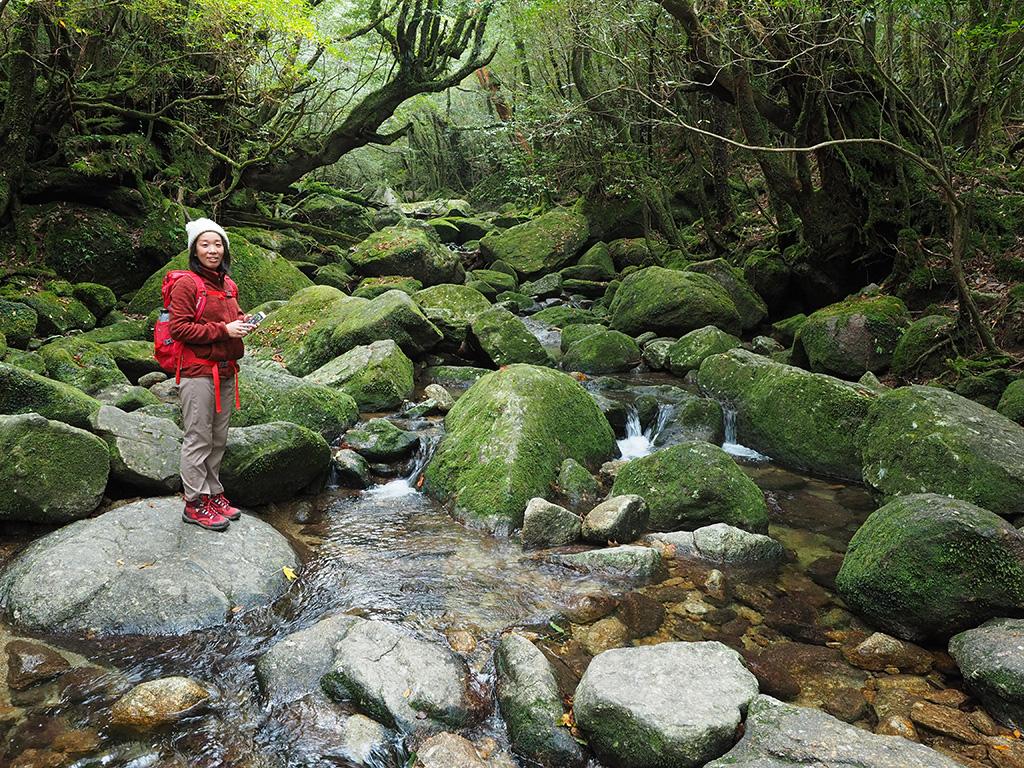 屋久島らしい苔に覆われた沢を眺める参加者の写真