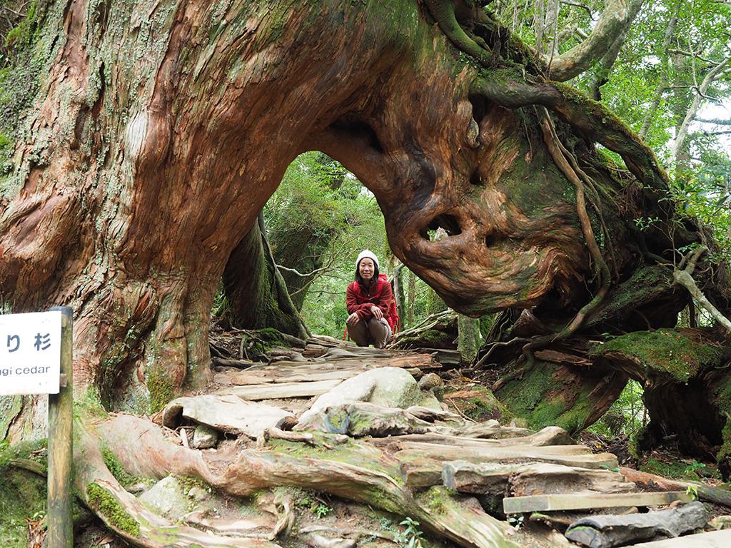 くぐり杉と呼ばれる木をくぐった向こう側で座ってこちらを見る参加者Iさんの写真