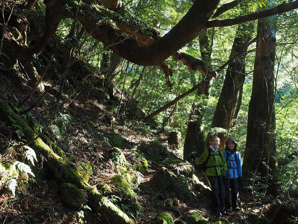 龍のように宙をうねるヤマグルマと、エコツアー参加者二人の写真
