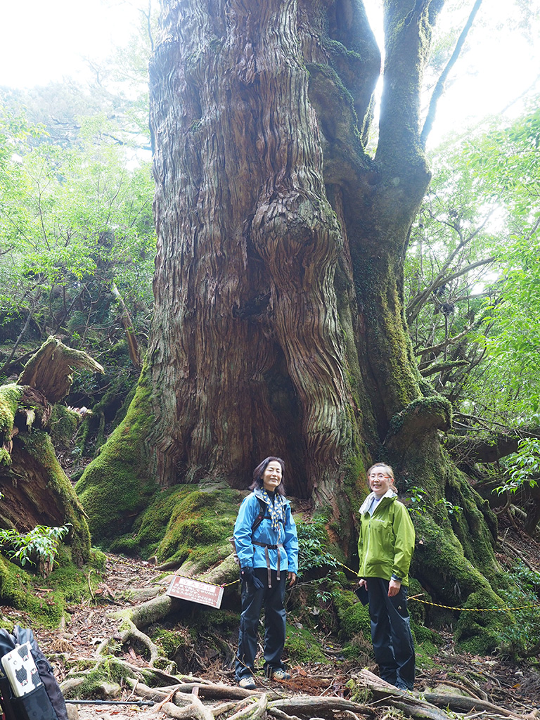 巨木・大和杉の前で記念撮影をする二人の写真