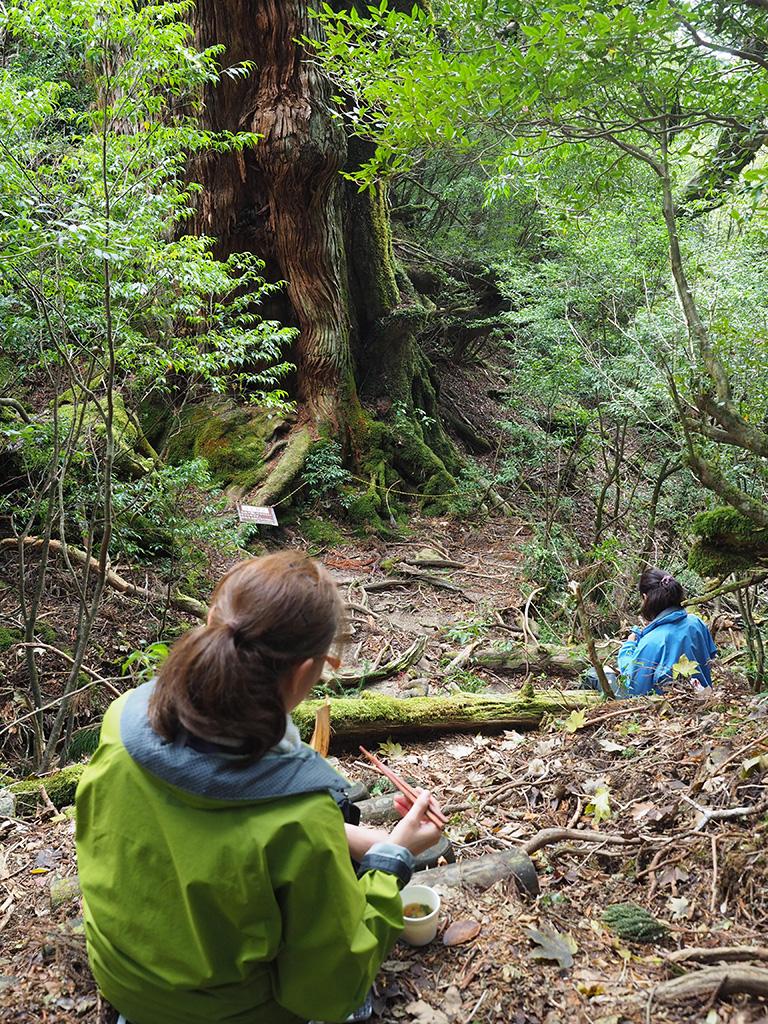 大和杉を見ながらランチをとる二人の後ろ姿写真
