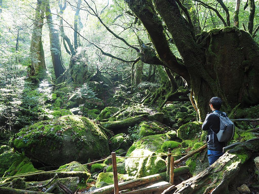 旧・もののけの森にて景色を魅入るSさん