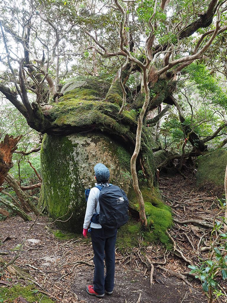 巨岩をなめるようにして生える木を眺める後ろ姿写真