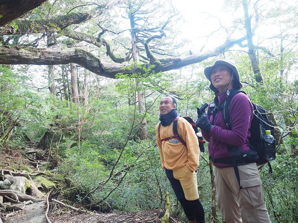 ハリギリの巨木の前で辺りを見廻していた二人の写真