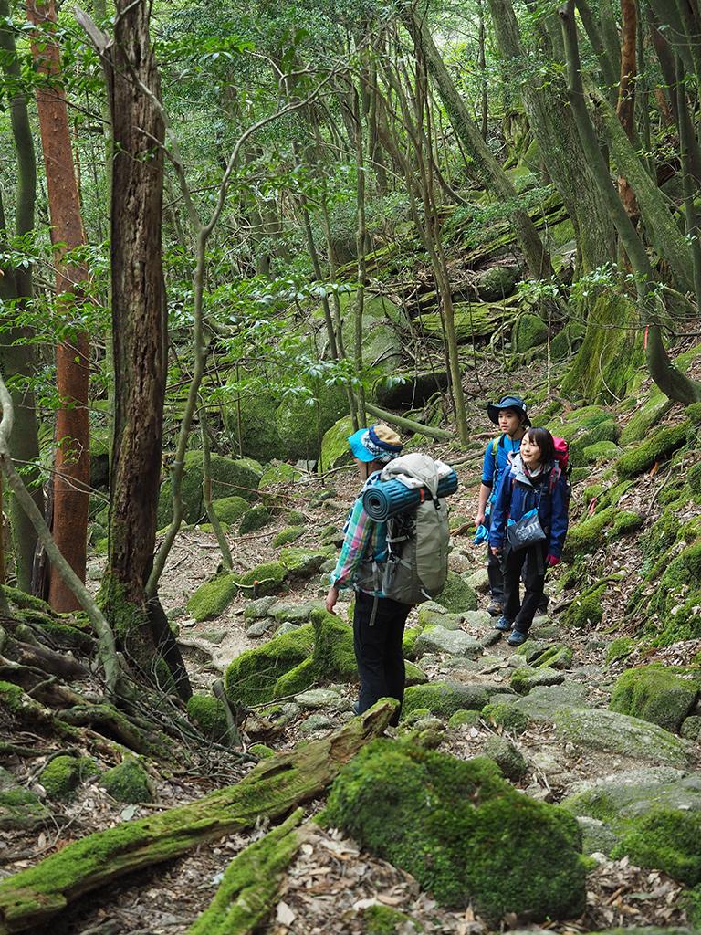 白谷雲水峡へ向かう苔むした景色の中、足を止めて何かに魅入っている3人の写真