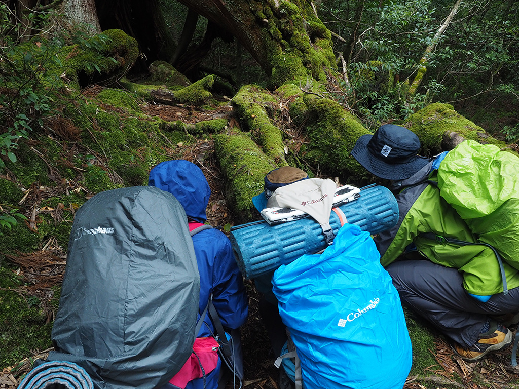 苔の合間に育つ小さなキノコと1才になる杉を見つけて写真を熱心に撮っている写真