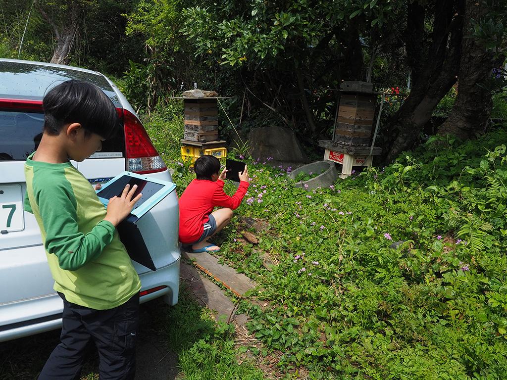タブレットでニホンミツバチの分蜂の光景を収める息子2人の写真