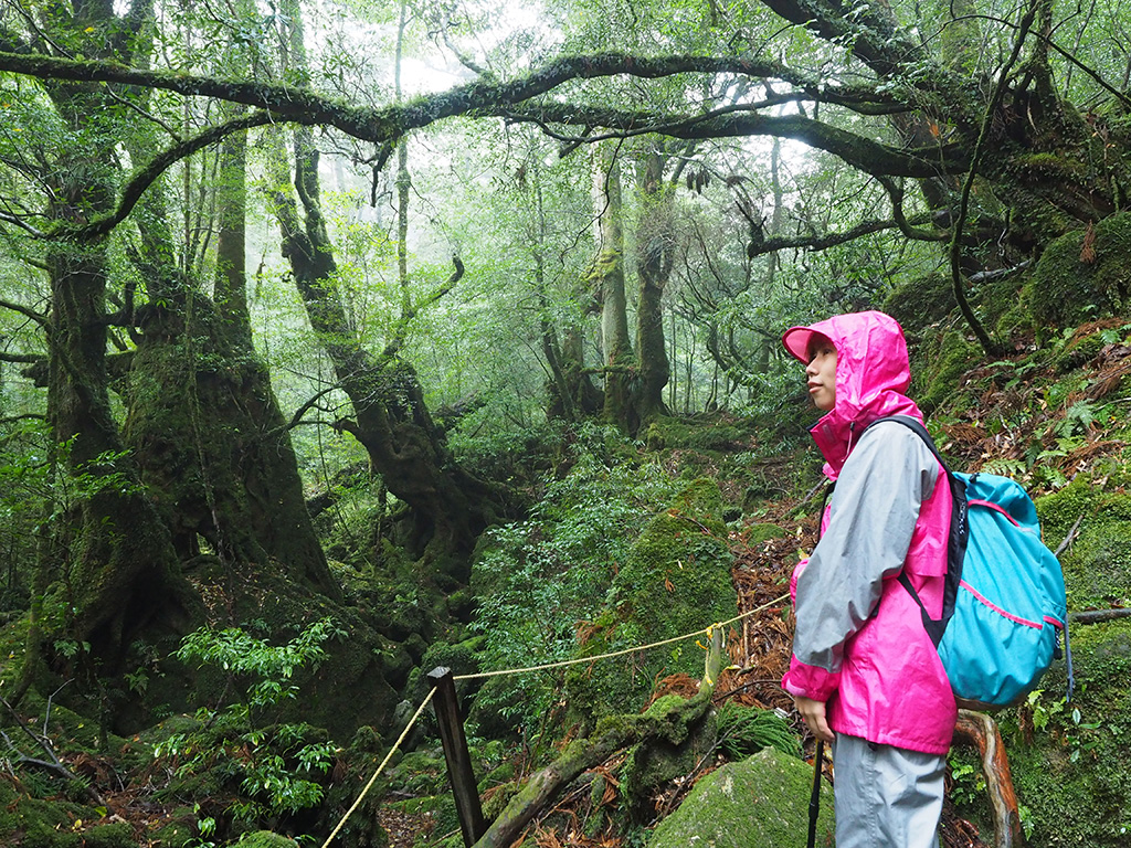 有名な「苔むす森」でぼ〜っと景色を眺めるTさんの横顔写真