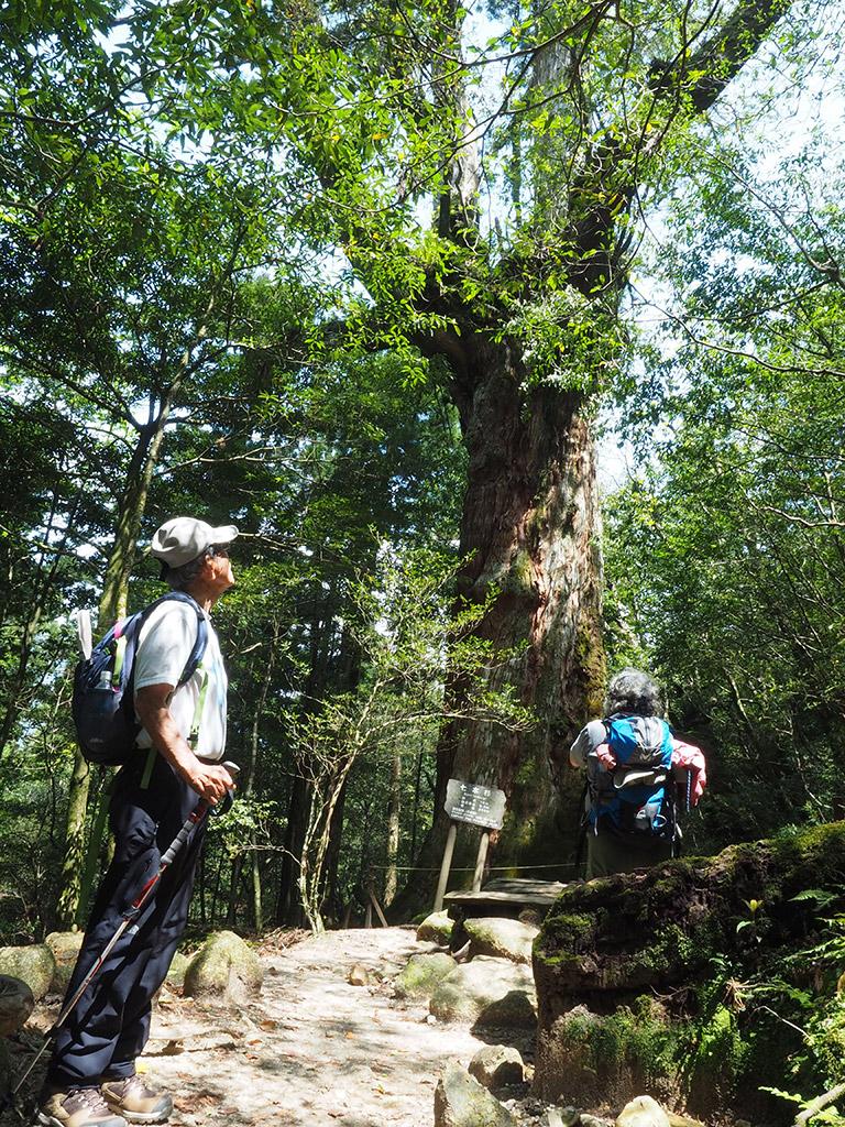 七本杉が青空に向かって手を広げるように枝を広げている様子と、それを見上げるお二人の写真