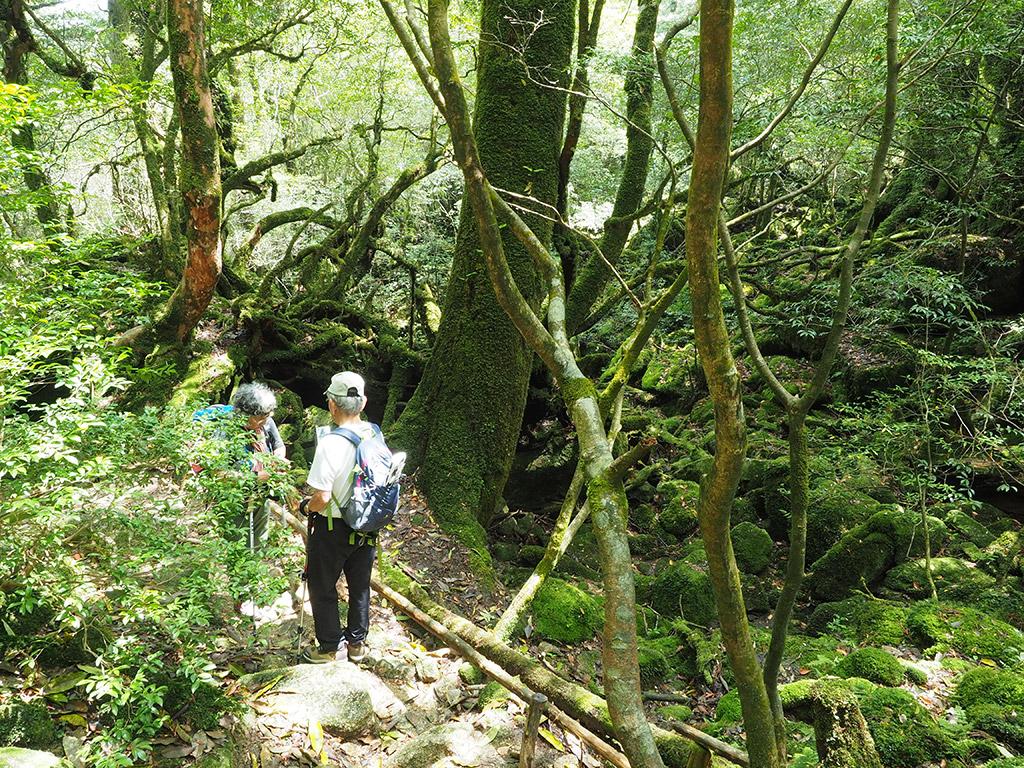 苔むす森の近くでスマホの受け渡しをしているお二人を遠くから撮った写真