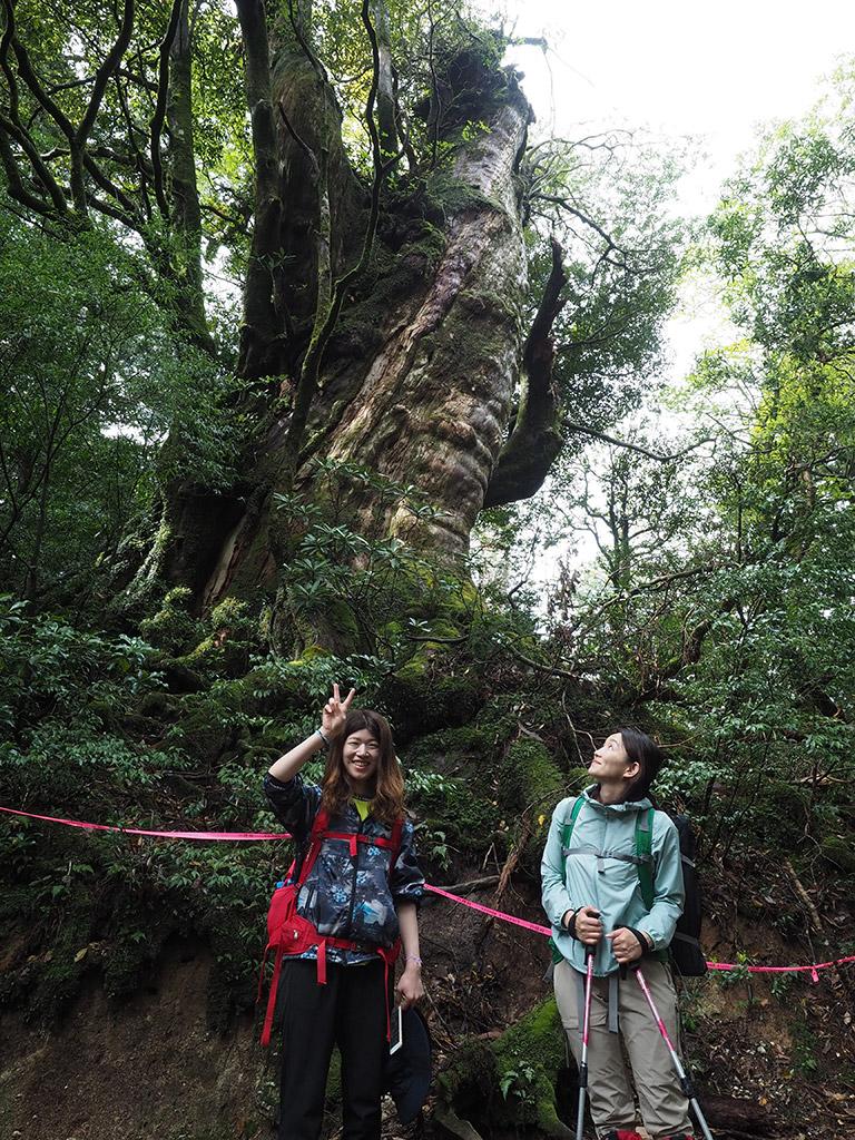 巨大な屋久杉の枝が折れてできた空間をバックに1泊ツアー最初の1枚