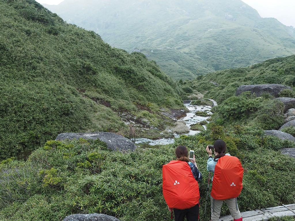 奥に宮之浦岳を望む場所で、ヤクシカが草を食べている所を撮影する二人の後ろ姿