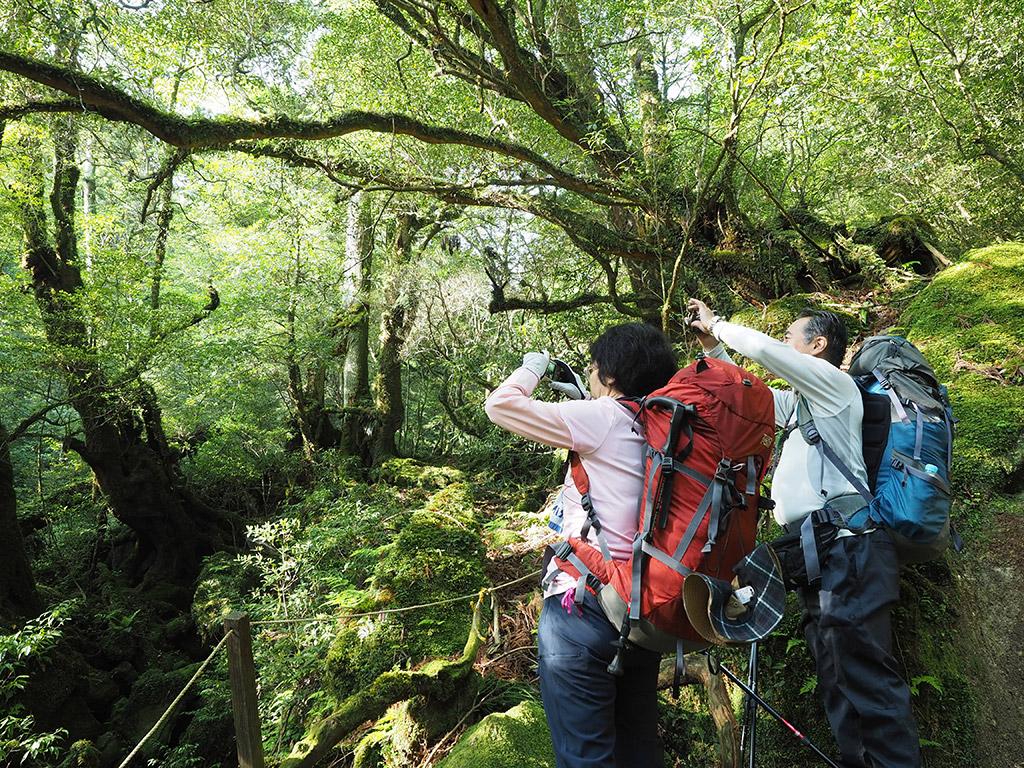 苔むす森(旧もののけの森)で朝陽が射し込む森の写真を撮る二人の写真