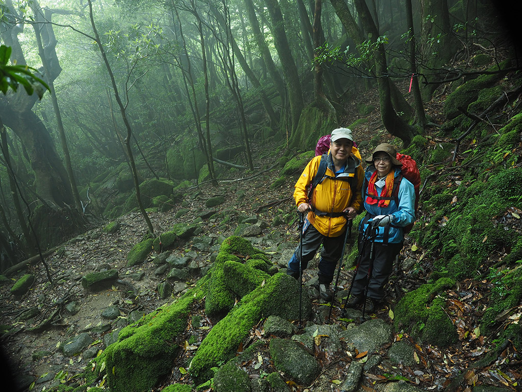雨の中、苔の美しい楠川歩道を歩く二人の写真