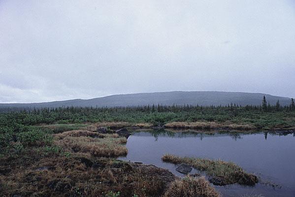 ツンドラ地帯の所々に見られる池のような水たまりの写真