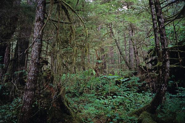 木々の枝から苔が長く垂れ下がる森の光景をおさめた写真
