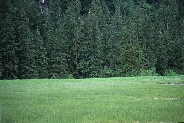 目の前に広がる大草原の向こうにグリズリーが小さく見える写真
