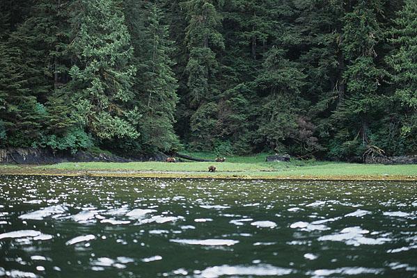 カヤックから見える小さな入江に3頭のグリズリーが写っている写真