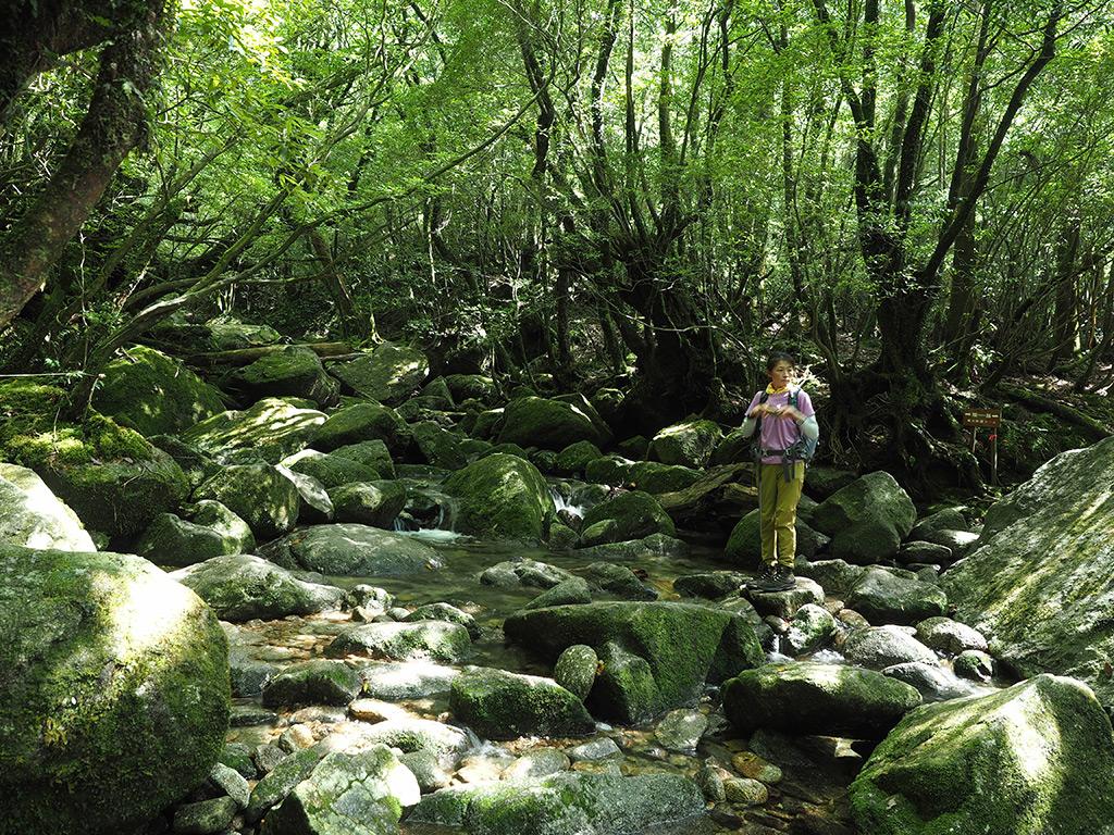 コケに覆われた白谷川本流の写真を撮りながら渡るKさんの写真