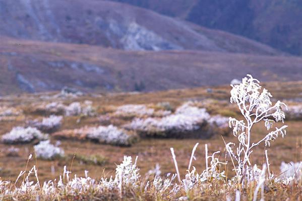足元で茶色くなっている小さな草本が凍てついていて、遠くには見渡す限りの尾根がいくつも広がっている写真