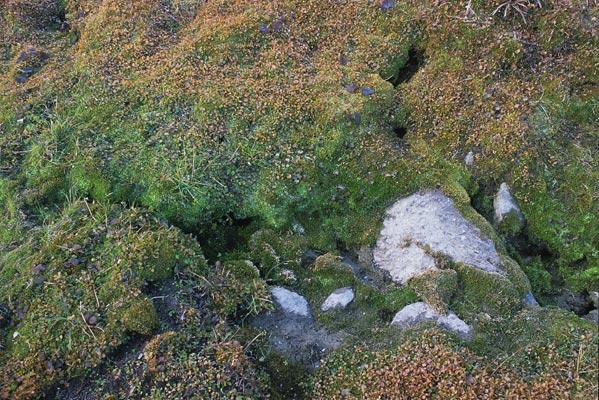 足元をちょろちょろと流れる小さな水の流れ沿いだけまだまだ緑が濃い苔が元気に生えている写真